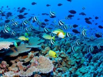 El fondo marino del Mar Mediterráneo