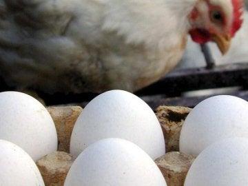 ¿Qué existió primero, el huevo o la gallina?