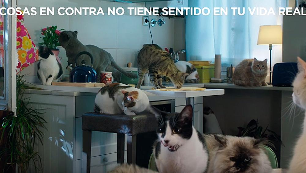 Gatos del vídeo del PP