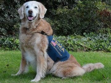 Bretagne, el héroe canino que ayudó a salvar vidas en el 11-S