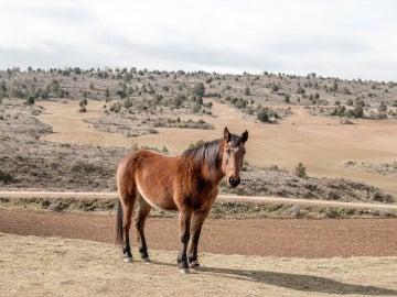 Una yegua en el campo