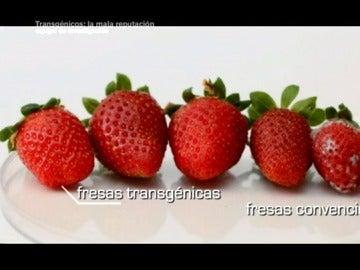 Frame 81.351106 de: ¿En qué se diferencia una fresa transgénica de una fresa convencional?