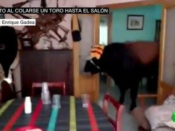 Un toro se cuela en el salón de una casa durante las fiestas de un pueblo valenciano