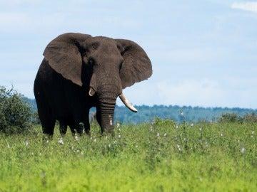 Un elefante en una imagen de archivo