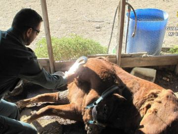 Los agentes del Seprona inspeccionan el cadáver del caballo dentro de la finca