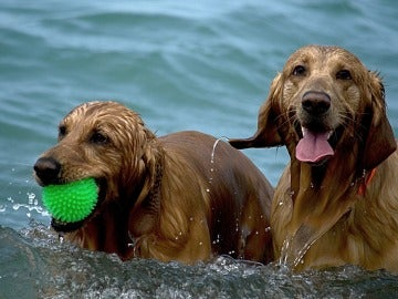 Dos perros dándose un baño