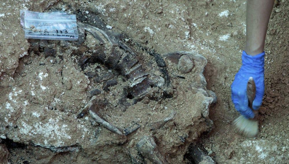 Trabajos de exhumación en la fosa número 113 del cementerio de Paterna