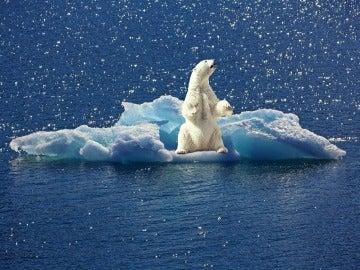 El nivel de mercurio en los osos polares disminuye debido al cambio climatico