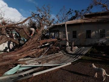 Un niño trepa por un árbol en Puerto Rico