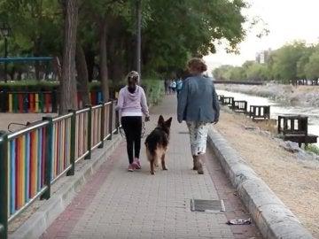 Uno de los perros de protección que acompaña a las víctimas de violencia machista
