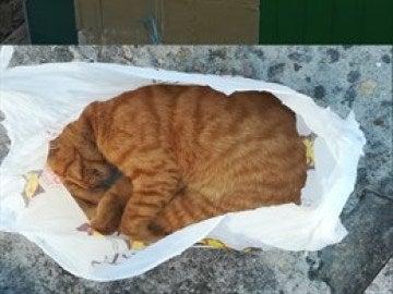 Los gatos yacen después de haberlos encontrado la Guardia Civil