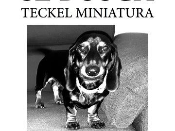 Lonchas, el perro desaparecido en Alcalá de Henares
