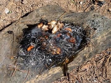 Los primeros humanos se adaptaron al frío quemando hueso