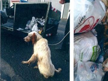 Imagen de un perro abandonado en Zalla, Vizcaya
