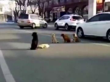 El vídeo viral de unos perros callejeros que se niegan a abandonar a otro atropellado