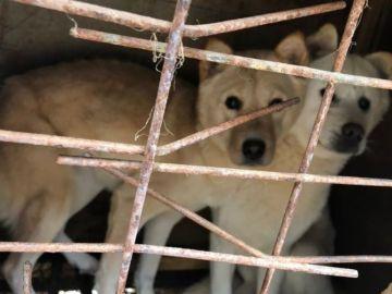Perros rescatados de una granja en Corea del Sur