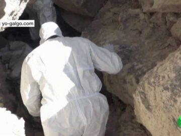 Localizada una fosa con 25 galgos muertos en Tarancón, Cuenca