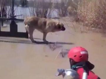 Rescate de un perro en Gallur, Zaragoza