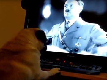 Perro y saludo nazi
