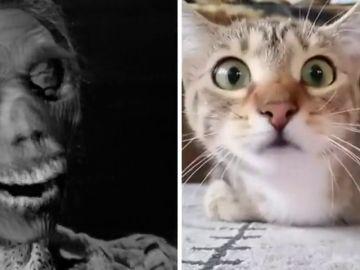 Mascotas vs. pelis de terror, la batalla final de internet