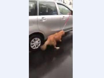 Arrastran a un perro atado a un coche bajo la lluvia