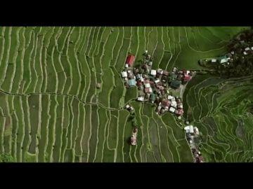 """""""Si existen 127.000 variedades de arroz, ¿por qué sólo se comercializa el 2%?"""": 'La semilla que alimenta el mundo', en Enviado Especial"""