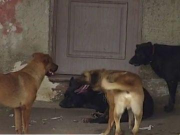 Los perros que atacaron al hombre
