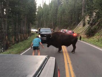 Un turista provoca a un bisonte en el parque natural Yellowstone