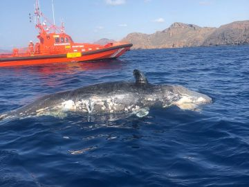 Cruz Roja y Salvamento Marítimo encuentran una ballena a la deriva en Murcia