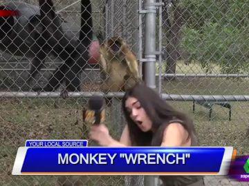 """El divertido vídeo de un mono que tira del pelo a una reportera en pleno directo: """"¿Viene de la selva de Magaluf?"""""""