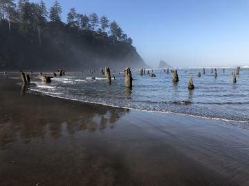 Bosque fantasmal en Oregon