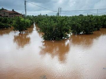 Imagen de terrenos inundados en Alcocéber, Castellón
