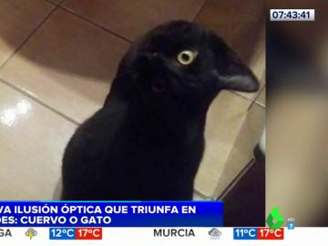 ¿Gato o cuervo?: el nuevo reto visual que triunfa en redes sociales