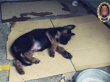 El cachorro que adoptará la Policía Local de Granada