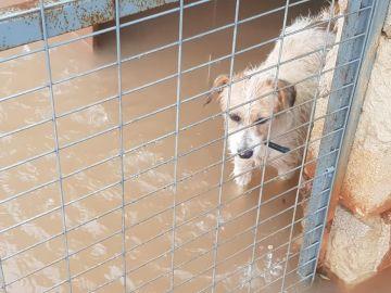 Inundación en un protectora de animales valenciana