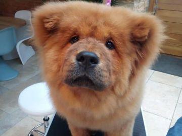 Imagen del cachorro que encerraron por morder a un policía en Reino Unido