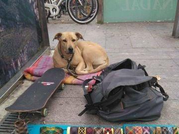 Sota, la perra abatida por un disparo de la Guardia Urbana