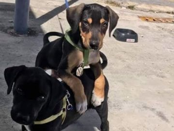 """Polo y Virtus, los cachorros """"agentes"""" de seguridad"""