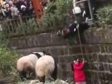 El agonizante rescate de una una niña que cayó a un foso de osos panda
