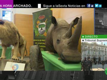 Seis investigados por tráfico de animales disecados de especies protegidas