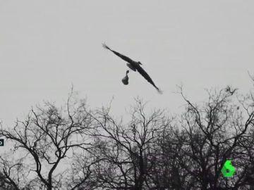 Imagen de un pájaro volando con una bolsa de plástico