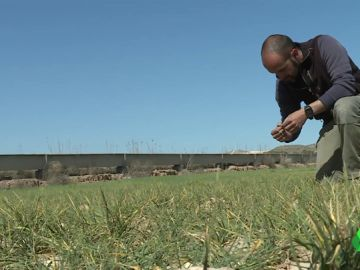 Los agricultores del sur de Madrid, en guerra con la Confederación del Tajo por los cortes de agua para regar