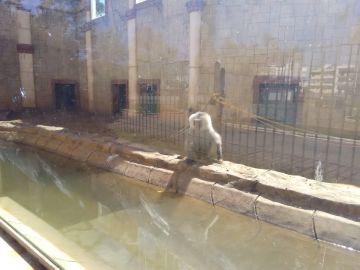 Un babuino en el zoológico de Ayamonte