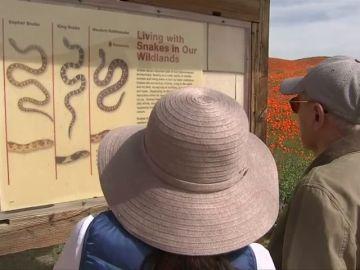 Turistas leyendo el aviso del peligro que suponen las serpientes para los seres humanos