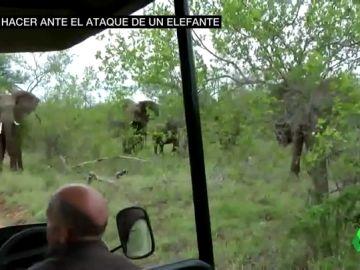 Así hay que actuar ante el ataque de una manada de elefantes: no correr y no darles la espalda