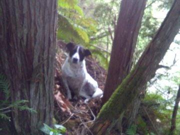 Imagen del perro del hombre desaparecido durante las labores de búsqueda.