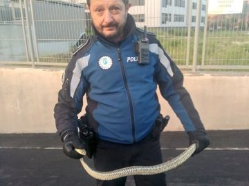 Imagen de la serpiente encontrada en un garaje de Villaverde, Madrid