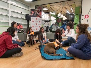 Alumnas de la Universidad Complutense trabajan en terapia con perros para reducir el estrés.