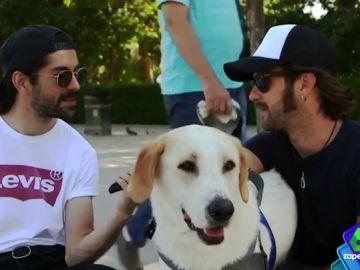 Fortfast pregunta a los jóvenes sobre sus mascotas