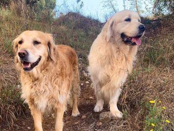 Los perros de Anna Simon